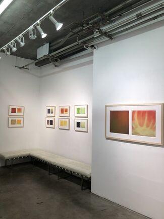 Daisy Craddock: Harvest, installation view