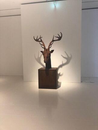 Mauro Corda - Zoospective, Morphospective, installation view