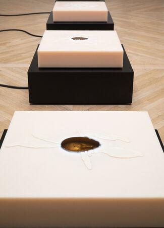 Camera Obscura, installation view