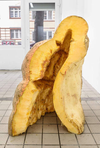 Namsal Siedlecki: Integument, installation view