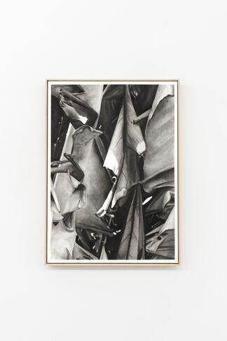 "Romain Cadilhon ""Dawn Chorus"", installation view"
