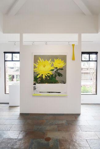 RAWsalt | Michael Harnish | THE FLOWER POLAROIDS, installation view