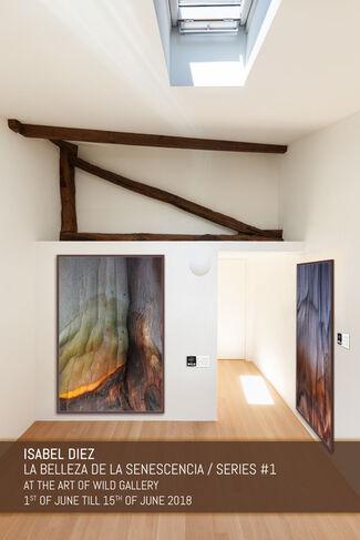 La Belleza de la Senescencia / The Beauty of Senecence, installation view