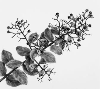 Rieko Hidaka, 'Crape Myrtle - Drawing II', 2010