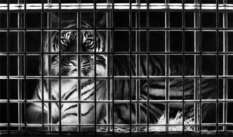 Robert Longo, 'Study for tiger in cage', 2010