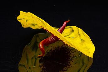 Yellow Bel Fiore
