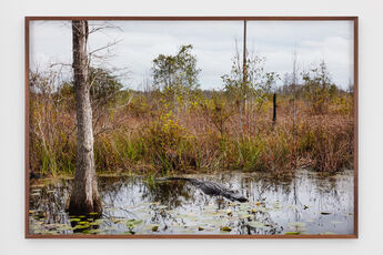 Untitled #2 (Swamps)