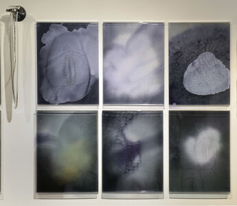 Janet Laurence, 'Photosynthesis Suite No.3', 2013