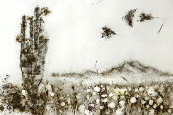 Sunshine and Solitude: Poppy Flowers