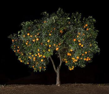 Tal Shochat, 'Orange', 2018