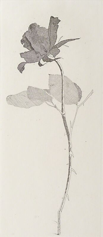 David Hockney, 'The Rose And The Rose Stalk', 1969, Print, Etching (framed), Rago/Wright