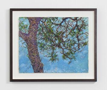 Beth Secor, 'Pecan Tree, Winter 2013', 2013