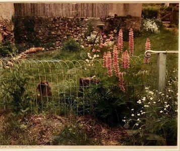 Frank Gohlke, 'A Yard, Mezilles Burgundy France. Field Of Flowers 1986 Vintage Color Photograph', 1980-1989