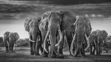 David Yarrow, 'The Mob', 2020