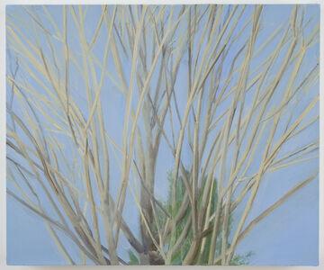 Sylvia Plimack Mangold, 'Winter Maple', 2007