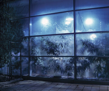 Gábor Arion Kudász, 'Greenhouse in Campona shopping center (Camp series)', 2005