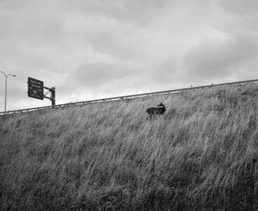 Vanessa Winship, 'Deer on the Highway Embankment, Buffalo, New York', 2012