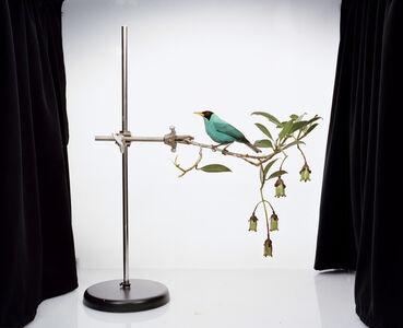 Sanna Kannisto, 'Chlorophanes spiza', 2010