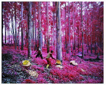 Richard Mosse, 'To be titled', 2015