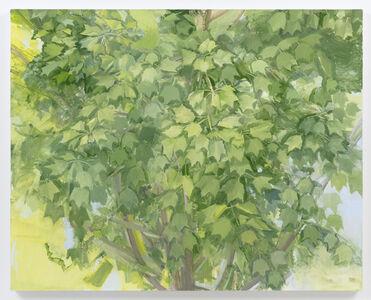 Sylvia Plimack Mangold, 'Summer Maple 2016', 2016