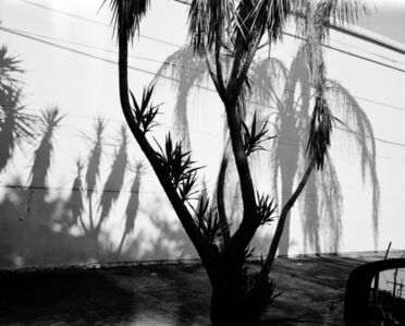 Patrice Aphrodite Helmar, 'Bywater Palms', 2018