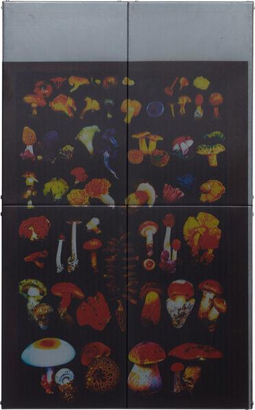Zak Kitnick, 'American Ships (Edible Mushrooms)', 2013