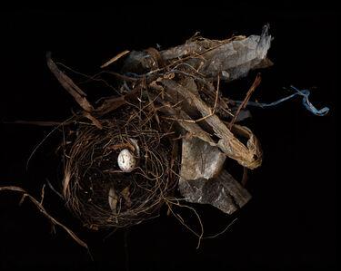 Lisa Frank, 'Nest (Modern Digital Bird Nest Still Life)', 2007