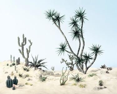 Didier Massard, 'Cactus Mussard', 2014