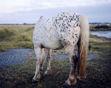 Robin Friend, 'Horse, New Forest', 2009