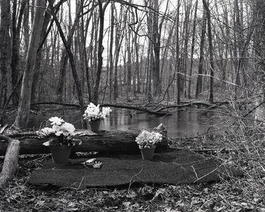 Paige Salmon, 'Fool's Paradise (Swamp)', 2019