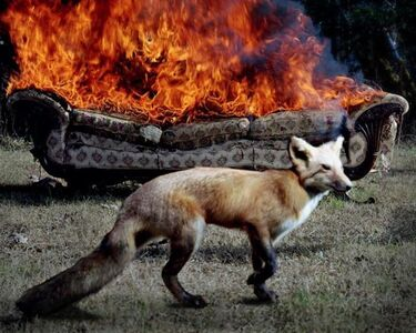 Jody Fausett, 'Fox, from Smoke From Another Fire Series', 2004