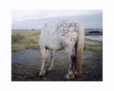 Robin Friend, 'Untitled', 2008