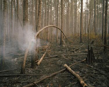 Anna Beeke, 'Burning Bough', 2012-2013