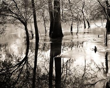 Frank Hunter, 'Edisto River in Flood (#115)', 1996
