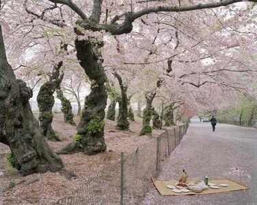 Satomi Shirai, 'Sakura in Central Park', 2007