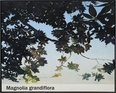 Rob Reynolds, 'Magnolia', 2021
