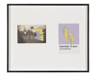 Tacita Dean, 'Pantone Pair (Orchid Bloom)', 2020