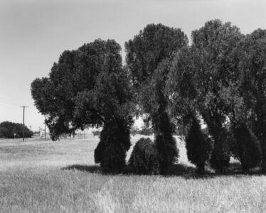 Frank Gohlke, 'Texas Memories #3: Cedar Trees (marking former house site) on Kell Boulevard, Wichita Falls', 1984/1988-92