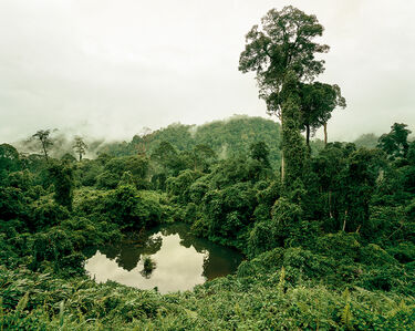 Olaf Otto Becker, 'Primary Forest 02, Lake, Malaysia 10/2012', 2012