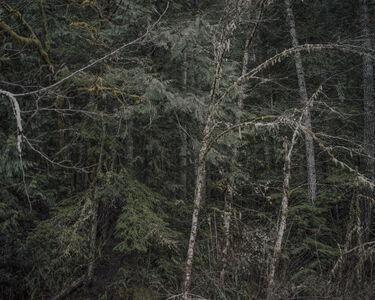 Chris Bennett, 'From the series Darkwood, #5', 2014