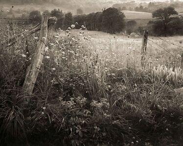 Frank Hunter, 'Queen Anne's Lace, Lady Borton's Farm (#45)', 1990