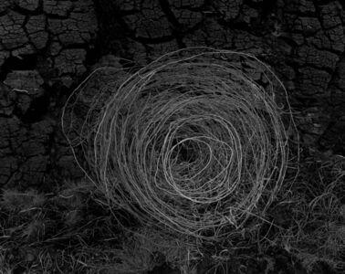 Amelia Stein, 'Sheep Wire II', 2017