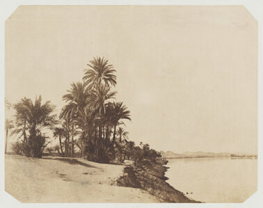 John Beasley Greene, 'Études de dattiers (Studies of Date Palms)', 1854