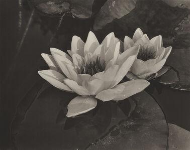 Alma Lavenson, 'Water Lilies', 1932