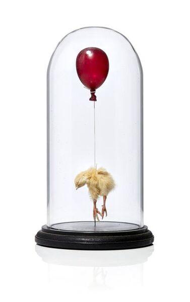 Polly Morgan, 'Still Birth (Red)', 2010