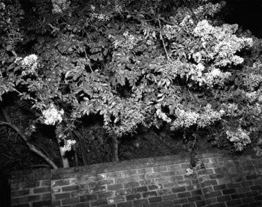 Patrice Aphrodite Helmar, 'Night Tree I', 2018