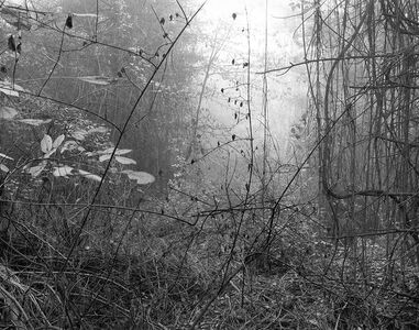 Gilbert Fastenaekens, 'Untitled #014', 1988-1996