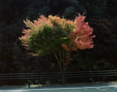 Toshio Shibata, 'Kumakogen Town, Ehime Prefecture (C-2540)', 2014