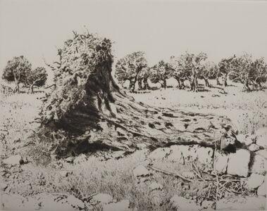 Walid Abu Shakra, 'Ancient olive trunk', 1985