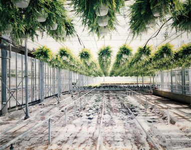 Wout Berger, 'Kas met varens [Greenhouse with ferns]', 2001